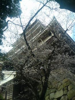 広島城2010桜2.jpg