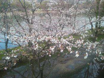 広島城2010桜3.jpg